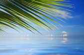 Tropical Sea with palm trees  — Stock Photo