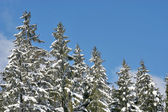 Sunny snow Landscape — Stockfoto