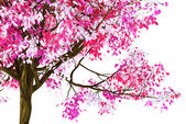 3d render image of pink spring tree pattern with white background — Stock fotografie