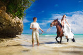 Bride and groom walking with horse on a tropical beach — Stock Photo
