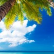 Dream scene. Beautiful palm tree over white sand beach. Summer n — Stock Photo #47171699