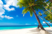 Scena sen. piękne palmy na piaszczystej plaży. lato n — Zdjęcie stockowe