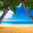 Dream scene. Beautiful palm tree over white sand beach. Summer n — Stock Photo #47393791