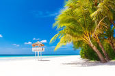 Dream scene. Beautiful palm tree over white sand beach. Summer n — Foto de Stock
