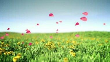 Hearts flies over summer grass field — Vidéo