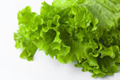 Fresh green leaf lettuce on white background — Stock Photo