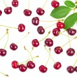 Berries ripe cherry with a branch and leaves isolated on white b — Stock Photo #50413025