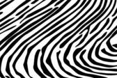 Zebra Texture Background — Stock Vector