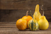Assorted ornamental gourds — Stock Photo