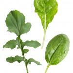 legumes de folha — Foto Stock