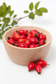 Rosehip (Rosa canina) — Stock Photo