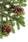 árvore de natal e cones — Foto Stock