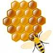 Honey bee and honeycombs — Stock Vector #46476805