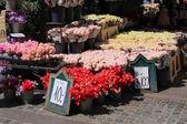 Sale of flowers in Copenhagen — Stock Photo