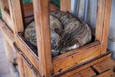Gray homeless cat — Stock Photo