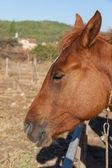 Horse on the farm, Turkey — Stock Photo
