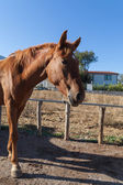 Koně na farmě, turecko — Stock fotografie