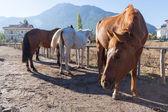 Horses on the farm, Turkey — Stock Photo