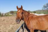 Häst på gården, turkiet — Stockfoto