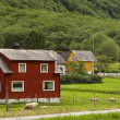 Stock Photo: Sheeps grazing near house in Norway