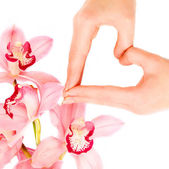 Blossom orchid brunch and woman hands — Foto de Stock