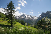 Green slope in european Alps — Stock Photo
