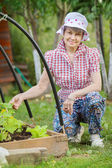 Senior woman at garden bed of cucumber — Stock Photo