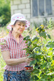 Retired woman with branch of black currant — Stock Photo