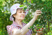 Senior  female in garden — Stock Photo