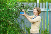 Woman harvesting berries of mespilus — Stock Photo