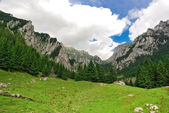 Amazing  Carpathian mountain panorama green grass and vivid blue sky in Romania — Stock Photo