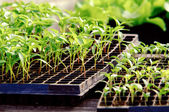 Close up of salad crop placed in boxes — Stock Photo