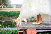 Cat walking under bride dress — Stock fotografie