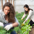 Working female workers on plantation — Stock Photo