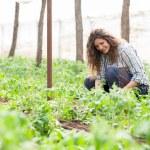 Female garden worker planting seedlings — Stock Photo