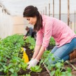 Young beautiful female garden worker — Stock Photo