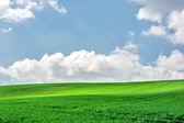 Voorjaar groen veld en de blauwe hemel — Stockfoto