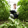 Young woman agriculture inspector checking plants — Stock Photo #45563207
