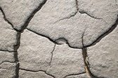 Cracked eartsh surface texture — Stock Photo