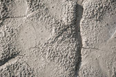 Grey soil texture — Stock Photo