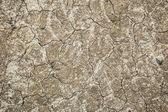 Moon like soil texture — Stock Photo