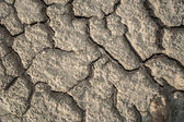 Dried mud texture with cracks — Stock Photo