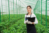 Greenhouse female inspector — Foto Stock