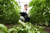 Young woman agriculture inspector checking plants — Stok fotoğraf