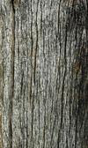 Wooden pattern — Stock Photo
