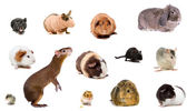 Set of different species rodents — Stock Photo