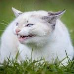 Cute white kitten — Stock Photo #48867629