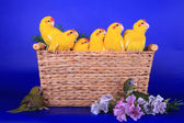 Brood of Red-fronted Kakariki parakeets on blue — Stock Photo
