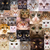 Cats faces — Stock Photo