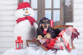 English cocker spaniel with winter decoration — Stock Photo